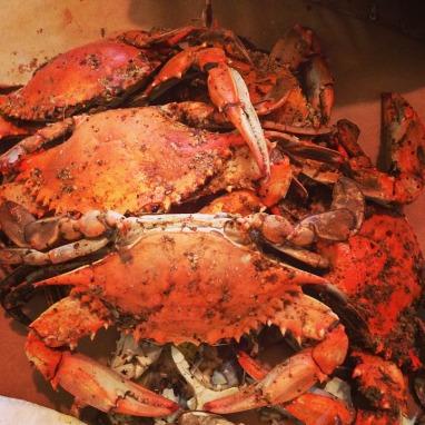 CHF_PickandShuck16_Crabs_Oct1