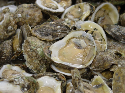 CHF_PickandShuck16_Oysters_Oct1
